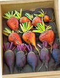 Vegetais alaranjados e roxos da beterraba na caixa de madeira Fotos de Stock