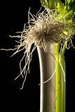 Vegetais; alho-porro e aipo Imagens de Stock Royalty Free