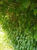 vegetais bonitos imagens de stock royalty free