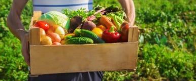 Vegetais caseiros nas mãos dos homens Foco seletivo da colheita imagens de stock royalty free