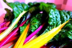 Vegetais coloridos da beterraba de forragem Fotos de Stock Royalty Free