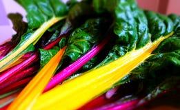 Vegetais coloridos da beterraba de forragem Fotografia de Stock