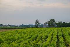 Vegetais crescidos frescos da exploração agrícola de Amish foto de stock