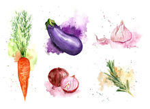 Vegetais da aquarela ajustados Imagem de Stock Royalty Free