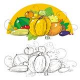 Vegetais da colheita ilustração royalty free