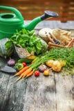 Vegetais da colheita com ervas e especiarias foto de stock royalty free