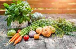 Vegetais da colheita com ervas e especiarias imagem de stock