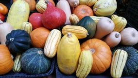 Vegetais da colheita da queda em um mercado Fotografia de Stock Royalty Free