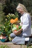 Vegetais da colheita do cozinheiro chefe Fotos de Stock Royalty Free