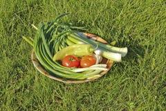 Vegetais da manhã Fotografia de Stock