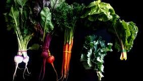 Vegetais da mola no fundo preto Imagens de Stock Royalty Free