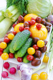 Vegetais da mola: Pepinos, vários tomates, alho, aipo, polpas, couve, cerefólio, aneto, alho, alho verde, oni da mola Foto de Stock
