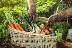 Vegetais da picareta do homem de uma cesta Foto de Stock Royalty Free