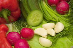 Vegetais da salada Foto de Stock