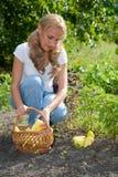 Vegetais da terra arrendada da mulher nova no jardim Foto de Stock