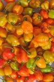Vegetais das pimentas vermelhas Foto de Stock Royalty Free