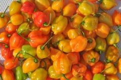 Vegetais das pimentas vermelhas Fotos de Stock Royalty Free
