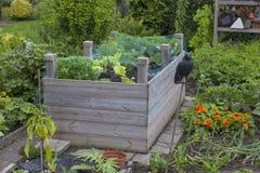 Vegetais de Grwowing Foto de Stock Royalty Free