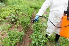 Vegetais de pulverização do fazendeiro no jardim com herbicidas, inseticidas ou inseticidas imagens de stock royalty free