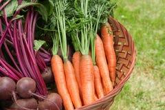 Vegetais de raiz Imagens de Stock