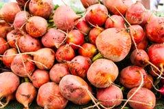 Vegetais de raiz Imagens de Stock Royalty Free