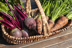 Vegetais de raiz na cesta Foto de Stock Royalty Free