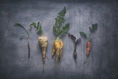 Vegetais de raiz orgânicos no fundo arranhado resistido imagens de stock