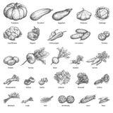 Vegetais desenhados à mão do grupo da garatuja do esboço Foto de Stock