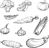 Vegetais desenhados ilustração stock