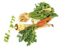 Vegetais do inverno Imagens de Stock