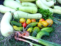 Vegetais do jardim Imagem de Stock