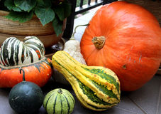 Vegetais do outono Foto de Stock Royalty Free