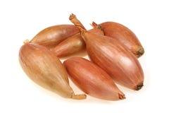 Vegetais do Shallot imagens de stock royalty free
