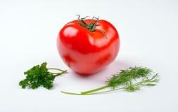 Vegetais do tomate com as folhas do aneto e da salsa Fotos de Stock