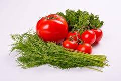 Vegetais do tomate com as folhas do aneto e da salsa Imagens de Stock