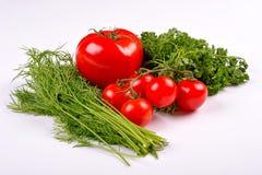 Vegetais do tomate com as folhas do aneto e da salsa Fotos de Stock Royalty Free