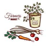 Vegetais do verde do mercado dos fazendeiros Imagens de Stock
