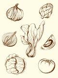 Vegetais do vintage Imagem de Stock