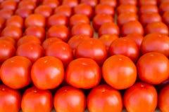 Vegetais dos tomates empilhados em seguido no mercado Fotografia de Stock Royalty Free