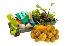 Vegetais e ervas para o jardim vegetal Imagem de Stock Royalty Free