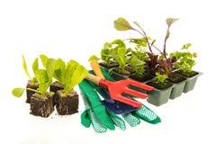 Vegetais e ervas para o jardim vegetal Fotos de Stock Royalty Free