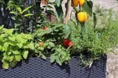 Vegetais e ervas que crescem em uns potenciômetros imagens de stock royalty free