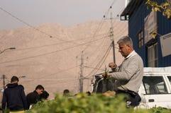 Vegetais e vendedor iraquianos das folhas Imagem de Stock