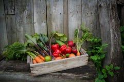 Vegetais em uma caixa Fotos de Stock Royalty Free