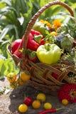Vegetais em uma cesta de vime Imagens de Stock Royalty Free