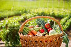 Vegetais escolhidos frescos na cesta de vime Imagens de Stock Royalty Free
