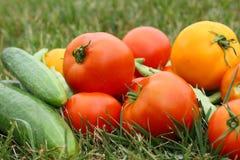 Vegetais fora na grama imagens de stock royalty free
