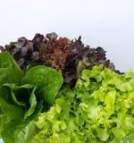 Vegetais frescos da hidroponia fotos de stock royalty free