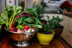 Vegetais frescos do jardim em um escorredor de prata ao lado das ervas que crescem em uns potenciômetros coloridos foto de stock