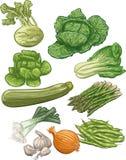 Vegetais III ilustração do vetor